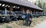 Buffelboerderij Luth in Eursinge houdt drive-thru: genieten van buffels en proeven van kaas en mozzarella