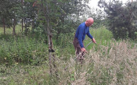 Millenniumbos wordt nieuw leven ingeblazen. Vrijwilligers vol enthousiasme aan de slag