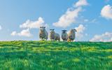 Het stormseizoen is in aantocht en daarom haalt het Waterschap Drents Overijsselse Delta (WDODelta) het vee, voornamelijk schapen, van de dijken rondom Hoogeveen en Meppel.